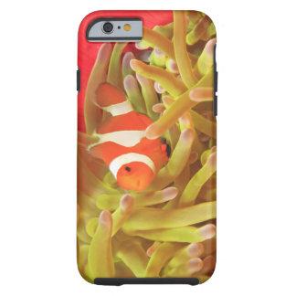 anemonefish en anémona de mar pacífica del indo funda de iPhone 6 tough