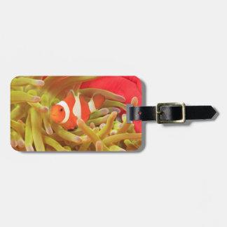 anemonefish en anémona de mar pacífica del indo gi etiqueta para maleta