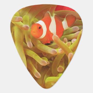 anemonefish en anémona de mar pacífica del indo púa de guitarra