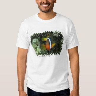Anemonefish negro (melanopus del Amphiprion) Camisas