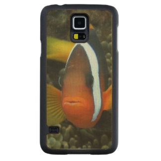 Anemonefish negro (melanopus del Amphiprion) Funda De Galaxy S5 Slim Arce