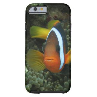 Anemonefish negro (melanopus del Amphiprion) Funda De iPhone 6 Tough