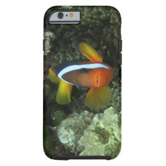Anemonefish negro (melanopus del Amphiprion) Funda Resistente iPhone 6