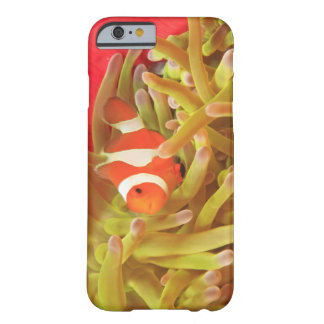 anemonefish on giant indo pacific sea anemone, barely there iPhone 6 case