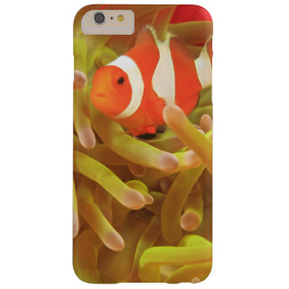 anemonefish on giant indo pacific sea anemone, barely there iPhone 6 plus case