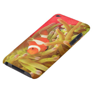 anemonefish on giant indo pacific sea anemone, barely there iPod cases