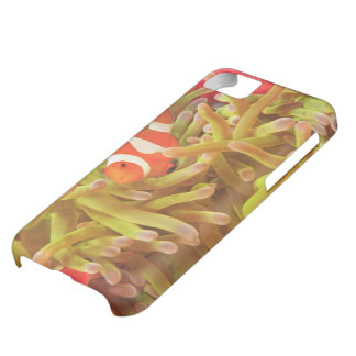 anemonefish on giant indo pacific sea anemone, cover for iPhone 5C