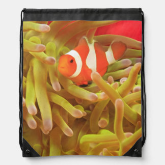 anemonefish on giant indo pacific sea anemone, drawstring backpack