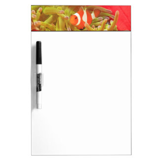 anemonefish on giant indo pacific sea anemone, Dry-Erase whiteboards