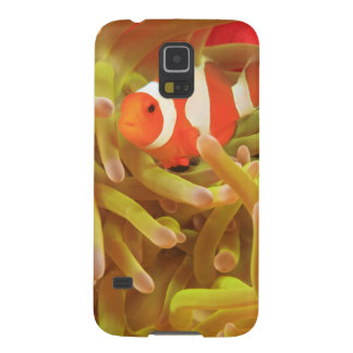 anemonefish on giant indo pacific sea anemone, galaxy s5 case