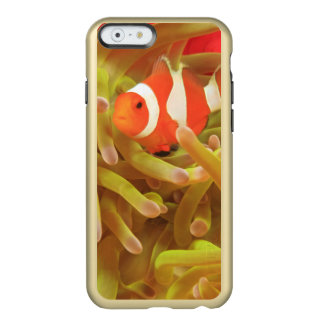 anemonefish on giant indo pacific sea anemone, incipio feather shine iPhone 6 case