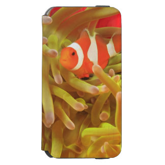 anemonefish on giant indo pacific sea anemone, iPhone 6/6s wallet case