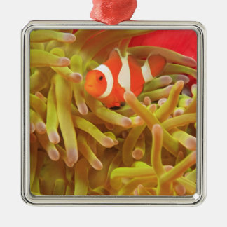 anemonefish on giant indo pacific sea anemone, metal ornament
