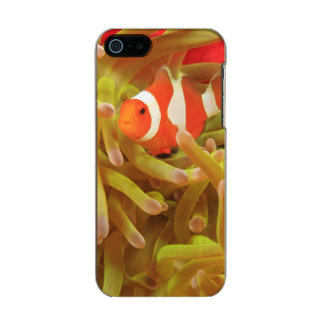 anemonefish on giant indo pacific sea anemone, metallic iPhone SE/5/5s case