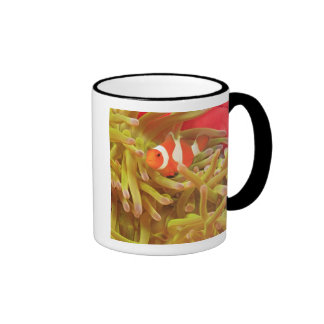 anemonefish on giant indo pacific sea anemone, ringer mug