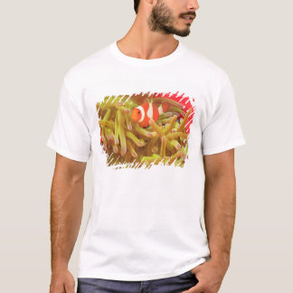 anemonefish on giant indo pacific sea anemone, T-Shirt