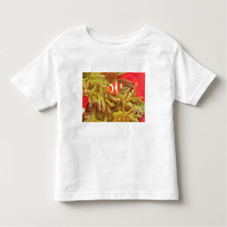 anemonefish on giant indo pacific sea anemone, toddler t-shirt