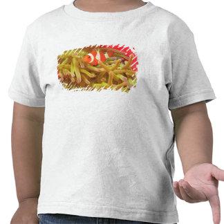 anemonefish on giant indo pacific sea anemone, tee shirt