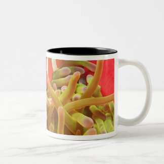 anemonefish on giant indo pacific sea anemone, Two-Tone coffee mug