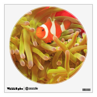 anemonefish on giant indo pacific sea anemone, wall decor