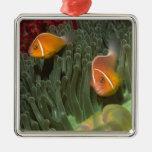 Anemonefish rosado en anémona de mar de Magnifican Adornos