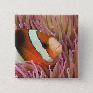 anemonefish, Scuba Diving at Tukang 2 Button