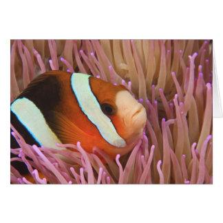 anemonefish, Scuba Diving at Tukang 2 Greeting Card