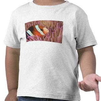 anemonefish, Scuba Diving at Tukang 2 Tshirt
