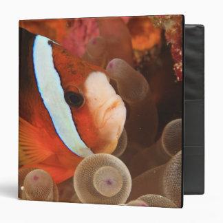 anemonefish, Scuba Diving at Tukang 3 Vinyl Binders