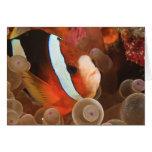 anemonefish, Scuba Diving at Tukang 3 Greeting Cards