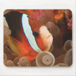 anemonefish, Scuba Diving at Tukang 3 Mouse Pad