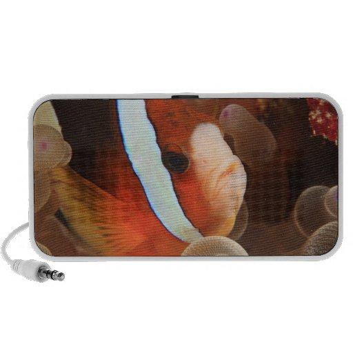 anemonefish, Scuba Diving at Tukang 3 Mp3 Speakers