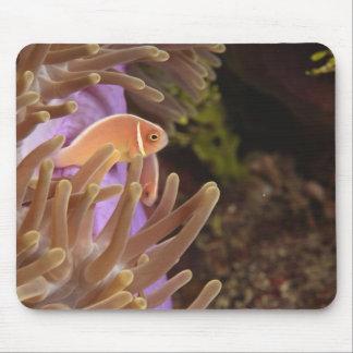 anemonefish, Scuba Diving at Tukang Mouse Pad