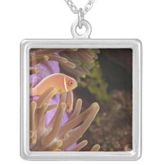 anemonefish, Scuba Diving at Tukang Custom Necklace