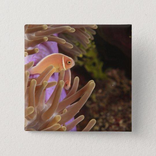 anemonefish, Scuba Diving at Tukang Pinback Button