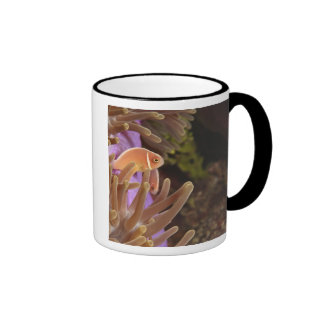anemonefish, Scuba Diving at Tukang Ringer Mug