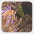 anemonefish, Scuba Diving at Tukang Square Sticker