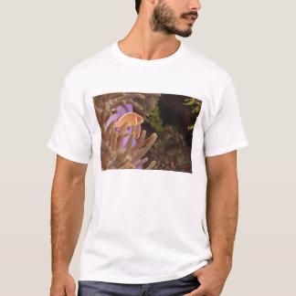 anemonefish, Scuba Diving at Tukang T-Shirt
