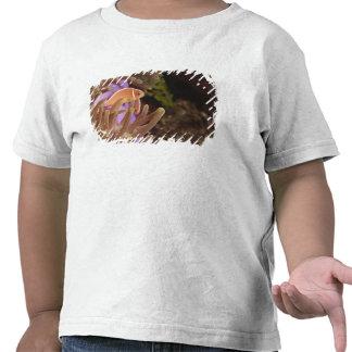anemonefish, Scuba Diving at Tukang Tee Shirt