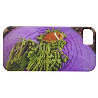 Anemonefish y anémona grande iPhone 5 carcasa