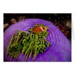 Anemonefish y anémona grande tarjeta de felicitación