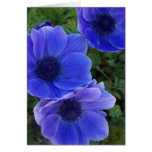 Anemones Cards