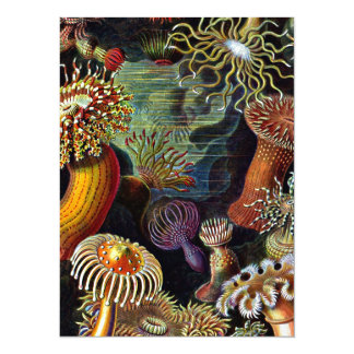 Anemones in Bright Colors Card