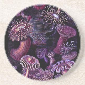Anemones in Dark Purple Drink Coaster