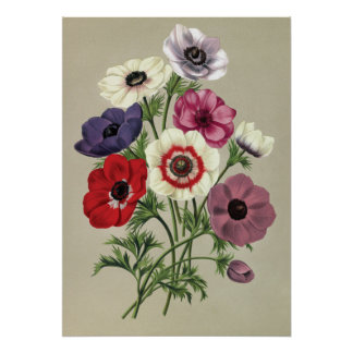 Anemones poster