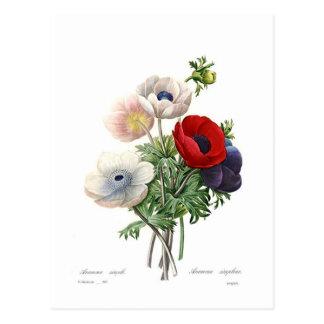 Anemonies Postcard
