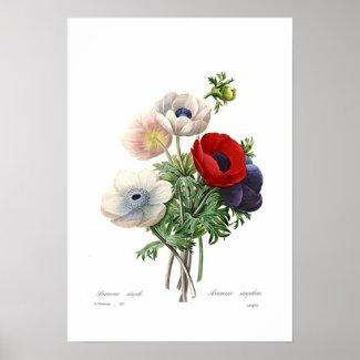 Anemonies Poster