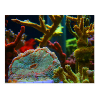 anenome saltwater image coral aquarium tank post card