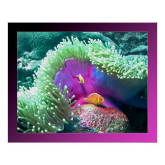 Anenome with its protectors - Palau Poster