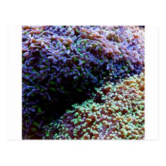 Anenomes verdes y púrpuras postal